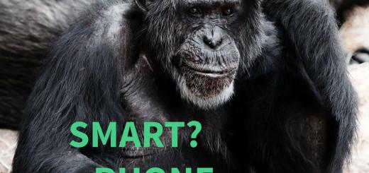 Gorilla che pensa